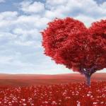 Training 'Volg je hart in je werk'